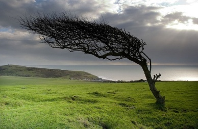 The wind does not break a tree that bends -- Sukuma proverb